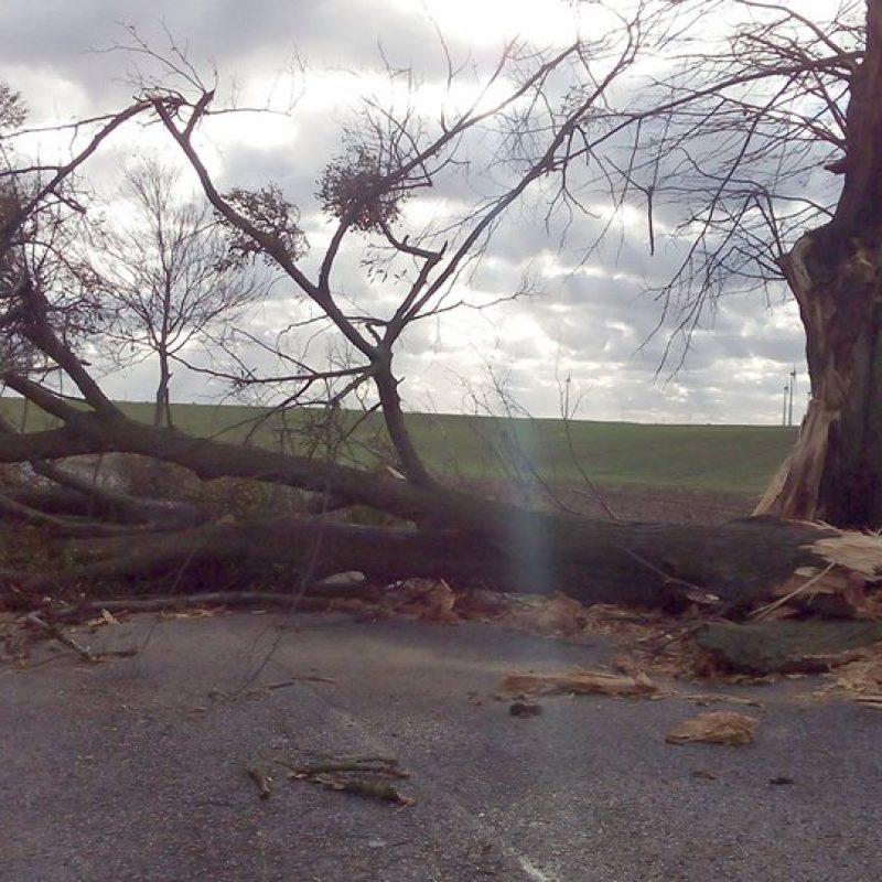 Væltet træ i stormvejr.